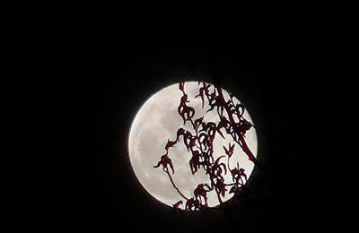 Veillées contes de la pleine lune