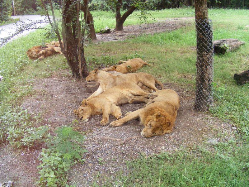 Une journée au Safari Word . Un Zoo, un Parc animalier et des Shows grandioses