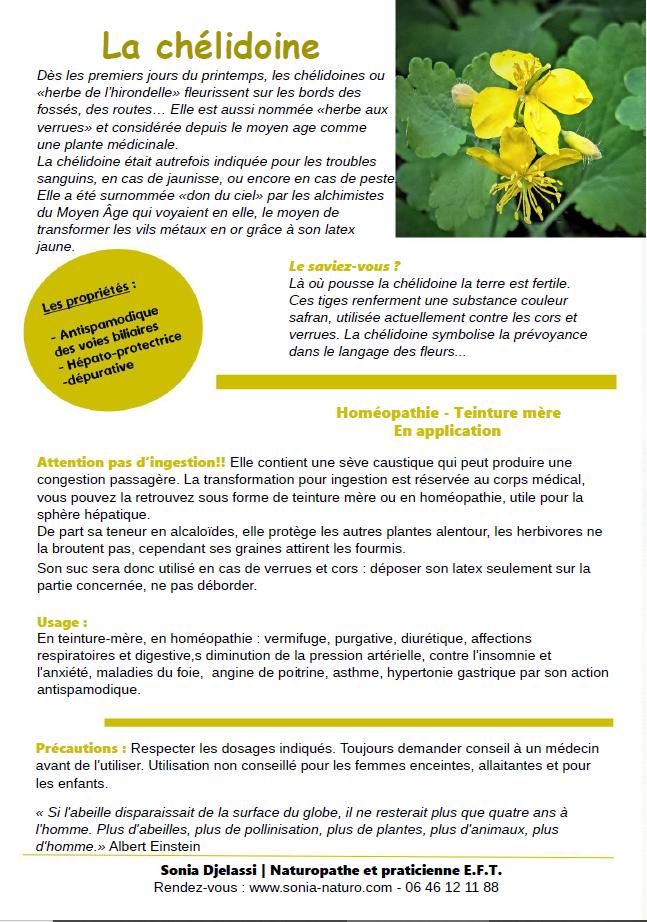 La plante du mois : la chélidoine