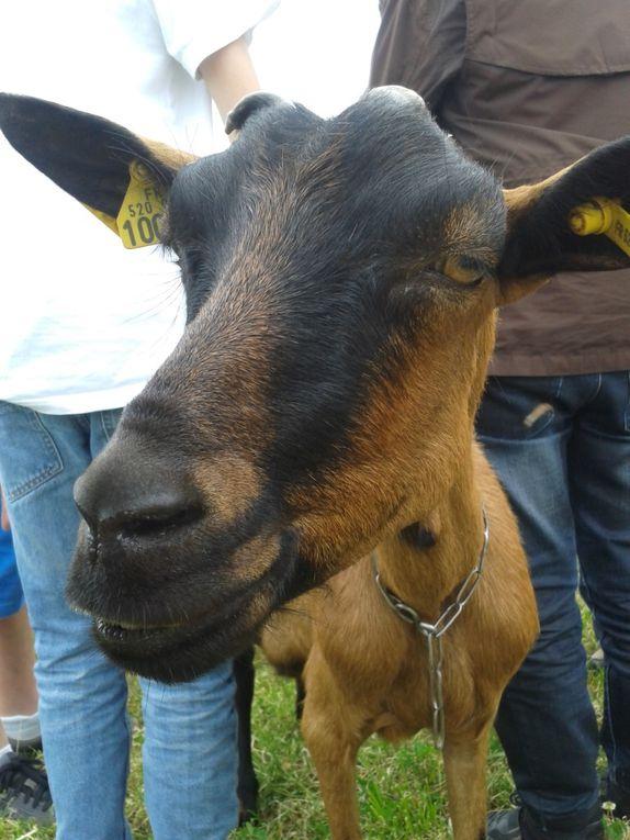 Des collègiens parmi les chèvres