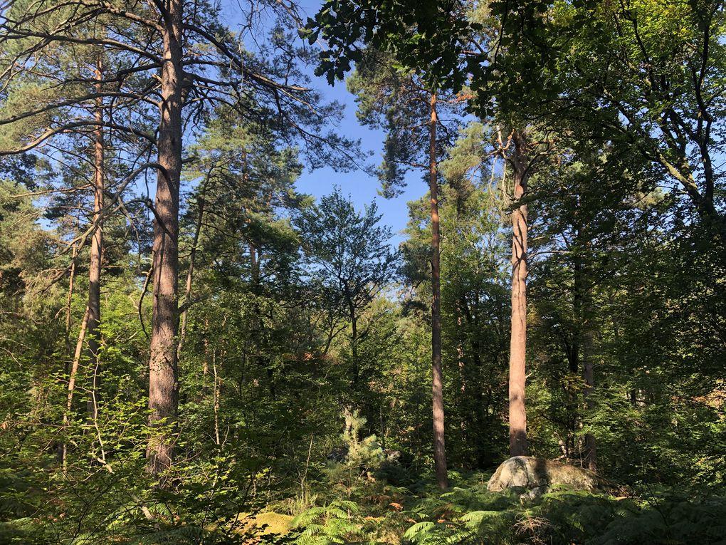Randonnée de Bois-Le-Roi à Fontainebleau - 17,3 km.