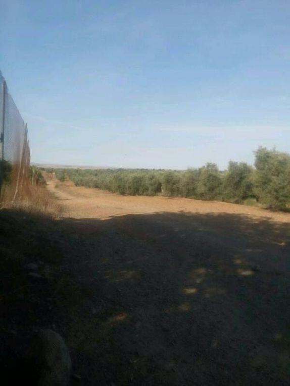 Vers Castilblanco - le chemin...
