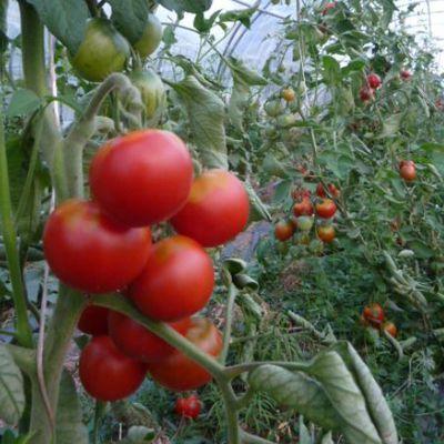 Meyer Légumes- un jardin maraîcher