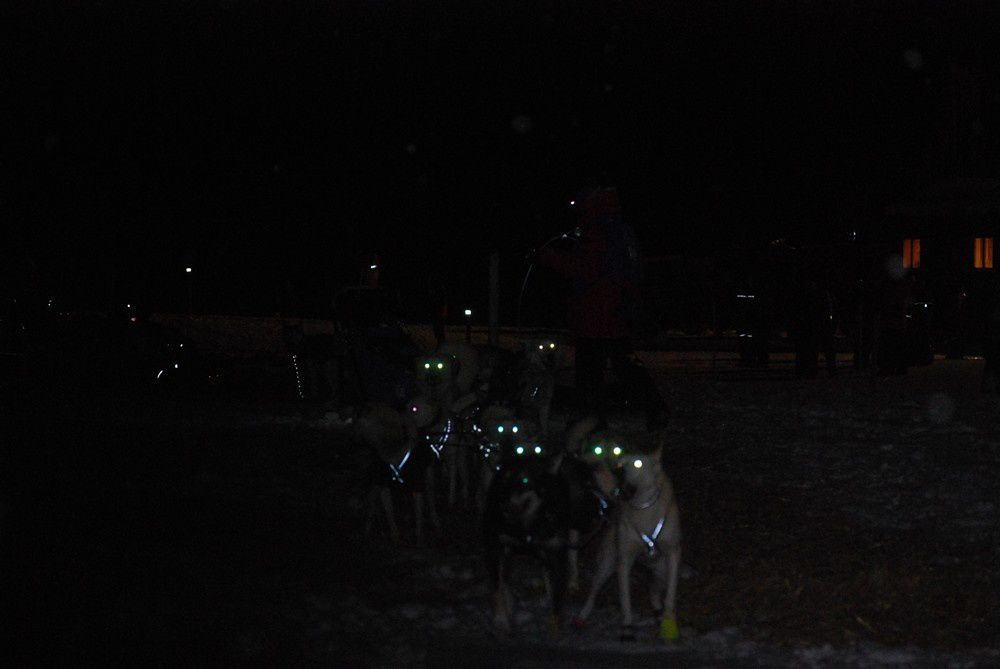 Course de chiens de traineau de longue distance norvégienne au départ de Roros