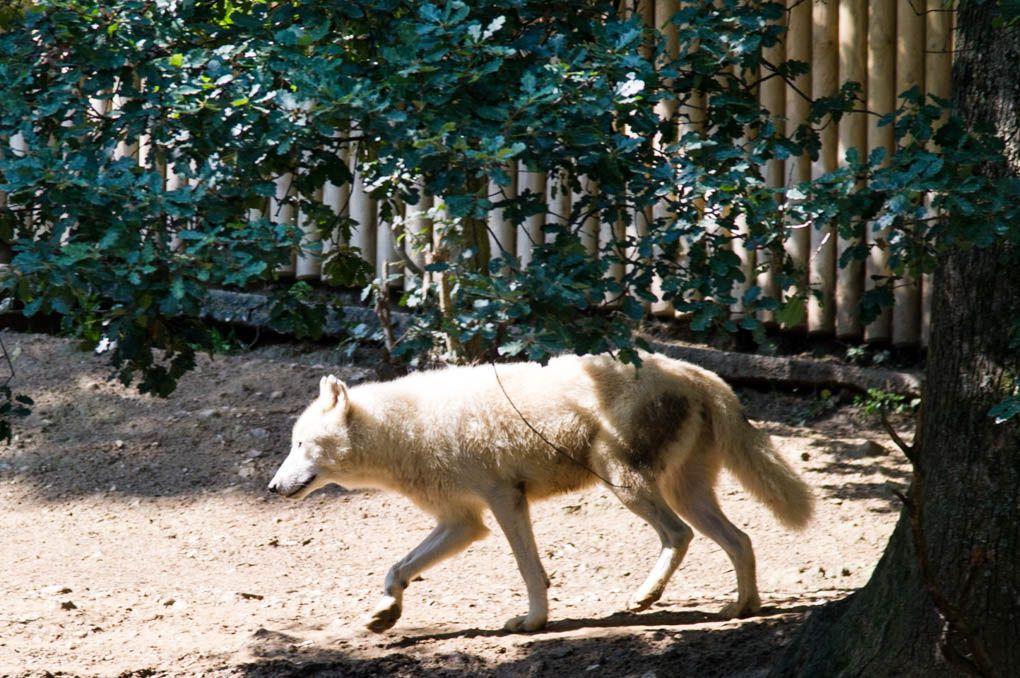 Les 3 petits réunionnais au Zoo de St Martin la Plaine