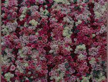 Jardins, jardin 2013 aux Tuileries