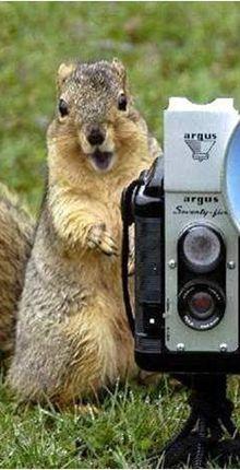 L'écureuil photographe de Renée...