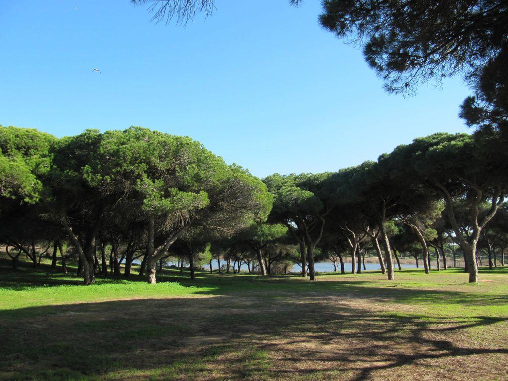 La lagune de Quarteira au sud du Portugal