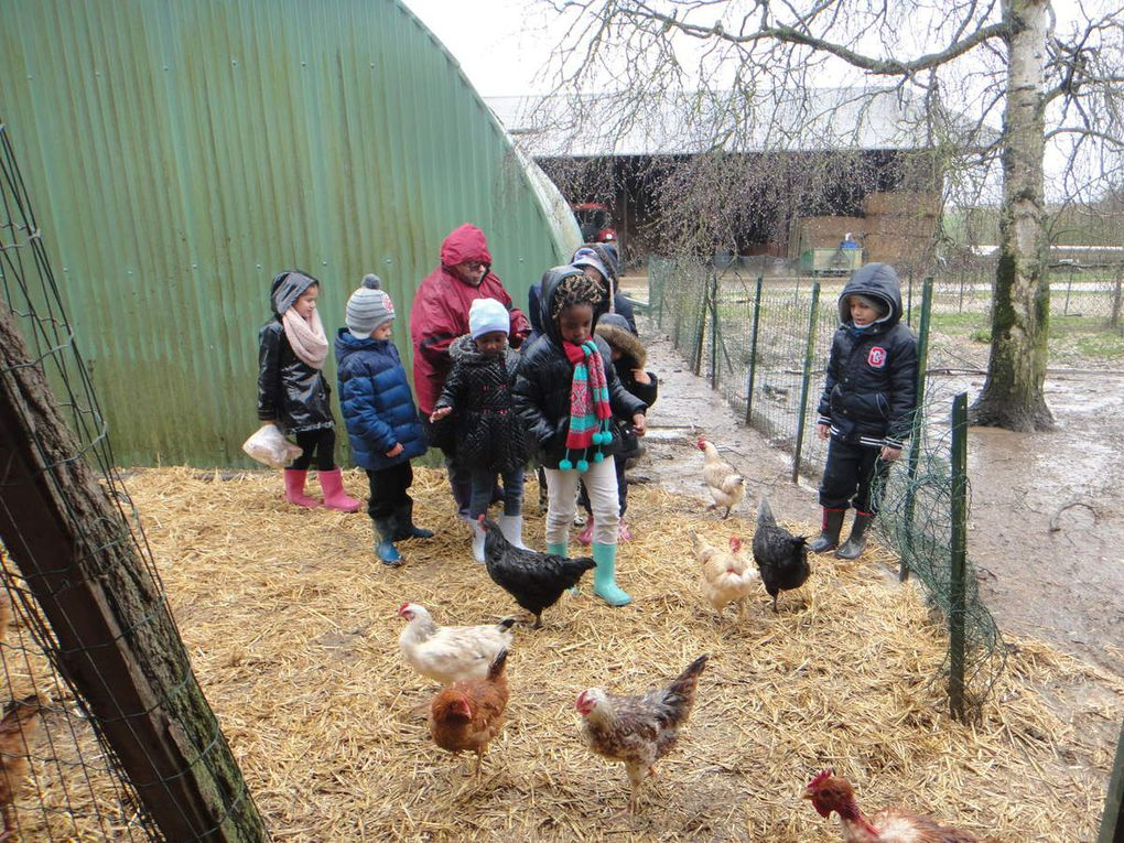 Poules vaches pintades poney...