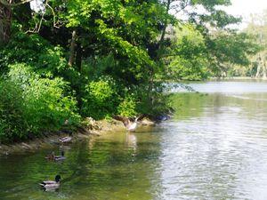 La mare Saint-James et ses canards, oies bernaches, cygnes et leurs dernier-nés