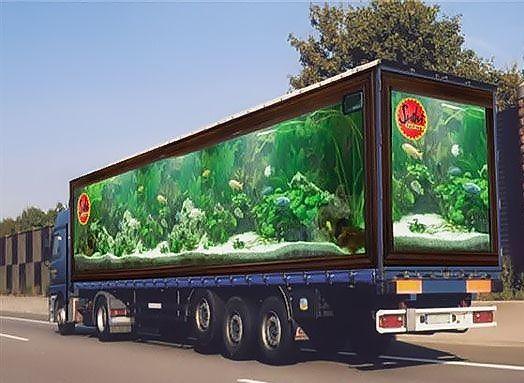 publicité pour des sushis sur camion.