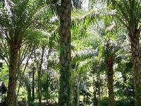 """""""Par moments, les palmiers se balancent comme pour secouer la poussière du jour"""". Eugène Fromentin"""