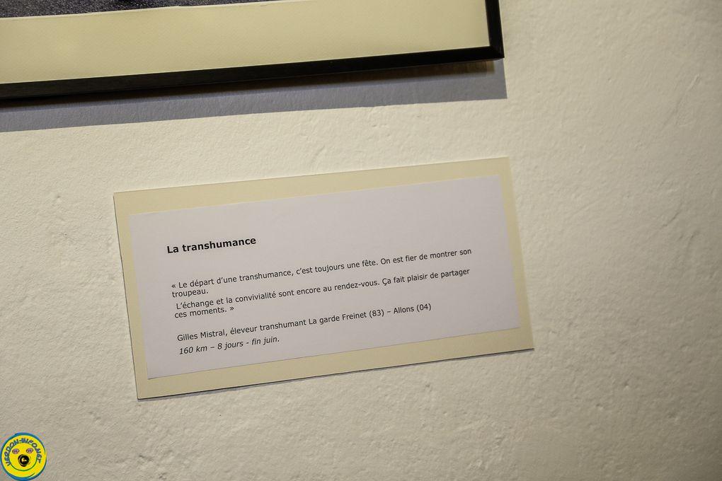 """Castellane  : inauguration de l'exposition """"De la plaine à la montagne : suivons les moutons"""""""
