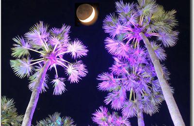 Soirée au marché de nuit (Ton Tan,  Khon Kaen)