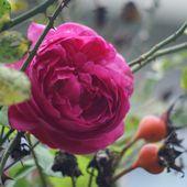 9. La rose de tous les jours - La minéralité expliquée aux cailloux