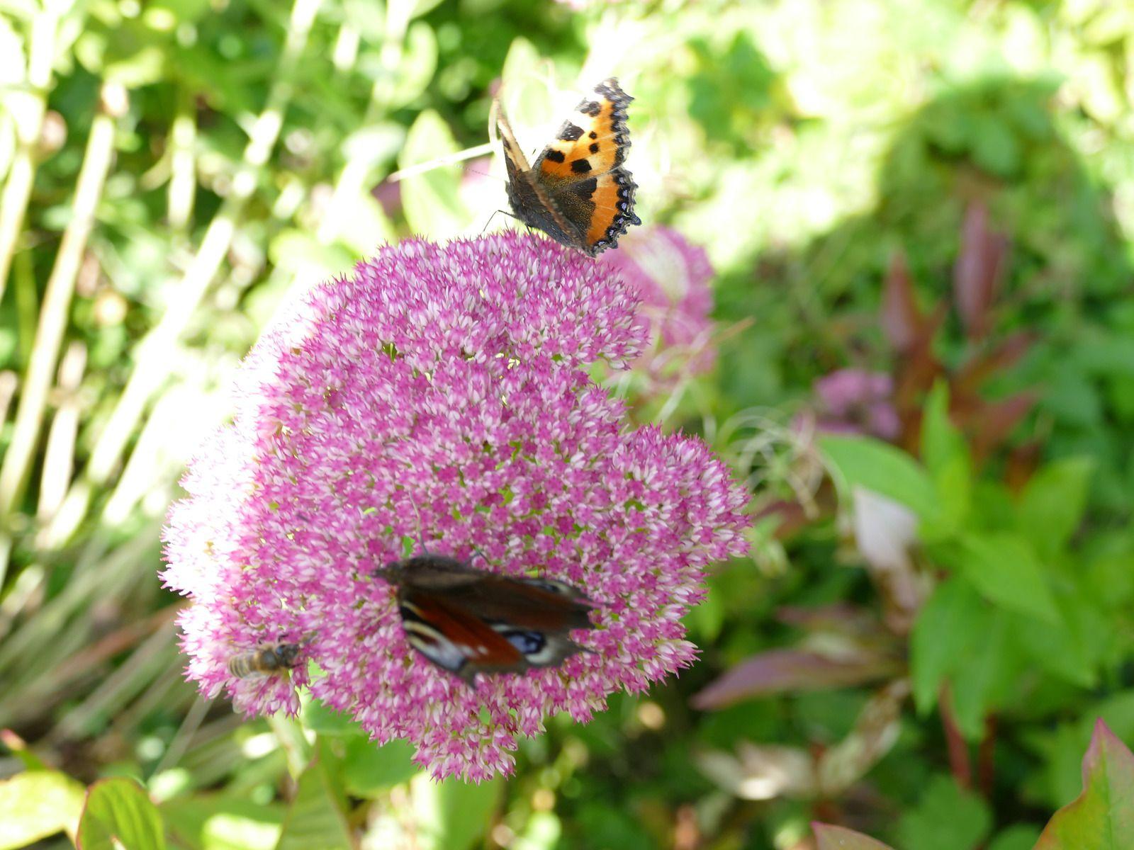 Ballet d'abeilles et de papillons