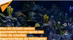 Plus de 10.000 coraux pourraient mourir après les tests de missiles hypersoniques du Pentagone