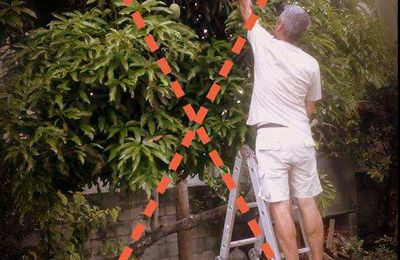 Cueillette de fruits : attention aux chutes d'arbres