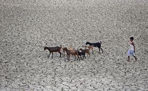 Près d'Allahabad en Inde. Rajesh Kumar Singh / AP