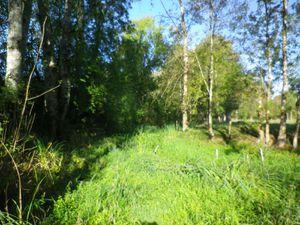 Zone de frayère à brochet en période estivale ; un assec très important qui permet le développement d'une végétation terrestre dense : autant de bons supports de reproduction au printemps prochain lors des crues.
