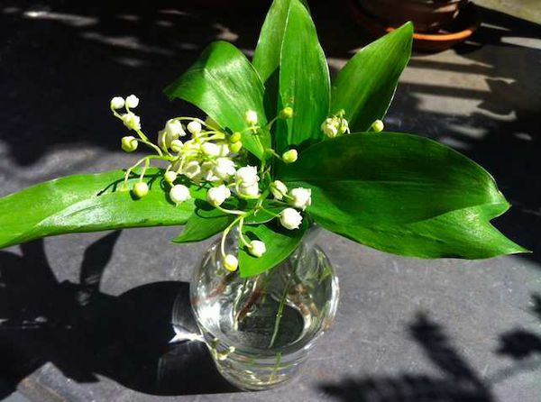 Lily of valley from Bourgogne