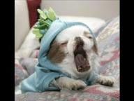 Wenn ihr Tiere genauso dolle liebt wie ich, dann gefallen euch diese Bilder bestimmt. :)