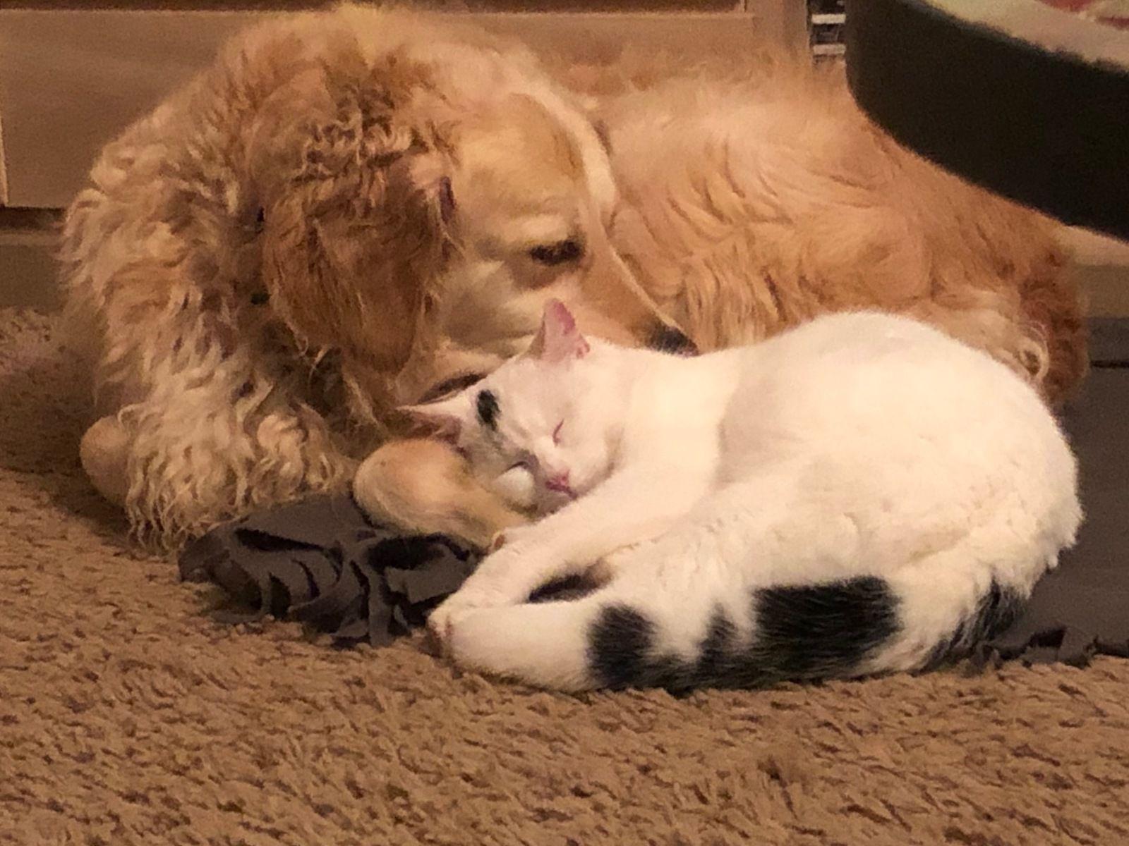 Adopté par les chiennes