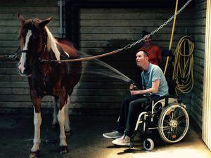 Le cheval avec EQUIPHORIA