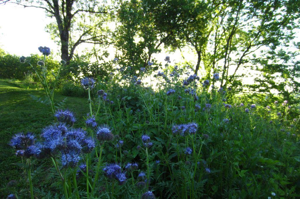 Album - Pollinisateurs et plantes mellifères