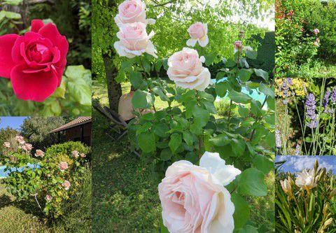 Le jardin, mi-juin 2021