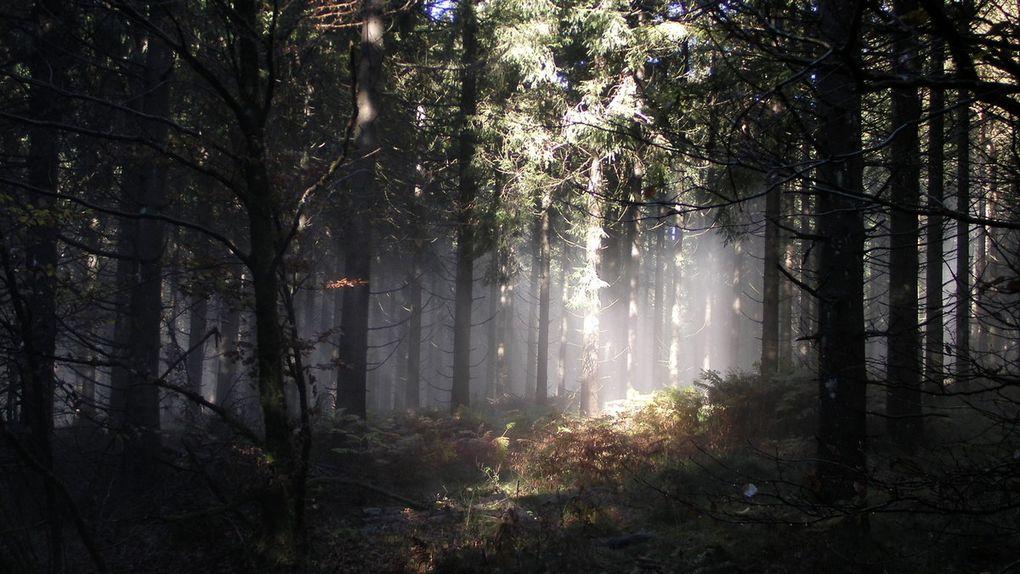 La lumière joue à cache cache. Facile dans ce bois aux mille troncs.