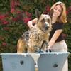 ¿Cómo bañar a tu perro?