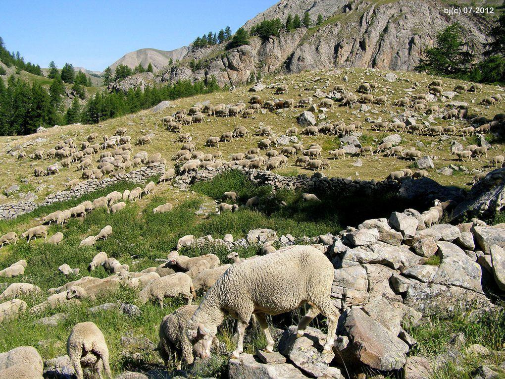 LE MONT PELAT - depuis le Lac d'Allos ( Val d'Allos )