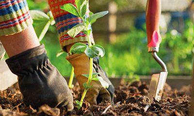 Misterbricolo jardine en septembre ...