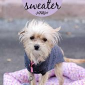 dog sweater sewing pattern and cute puppy pictures! - see kate sew