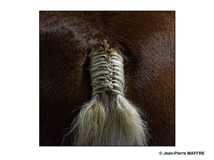 Allons, ne soyez pas déçus par ces postérieurs de chevaux.