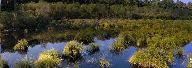 """""""A la reconquête des forêts"""", série documentaire inédite dès ce soir sur Ushuaïa TV"""