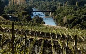 Viticulture in the Valleys of Bio-Bio and Itata