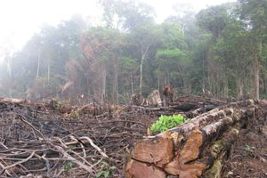 Originally posted on Aphadolie: ? Pour chaque plante tropicale qui disparaît, on estime qu'environ 30...