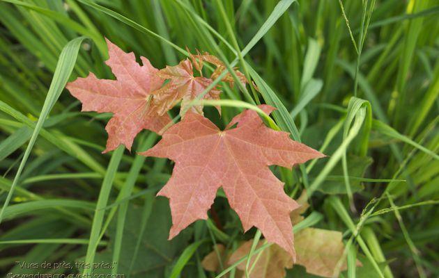 Quelques feuilles et jeunes pousses..