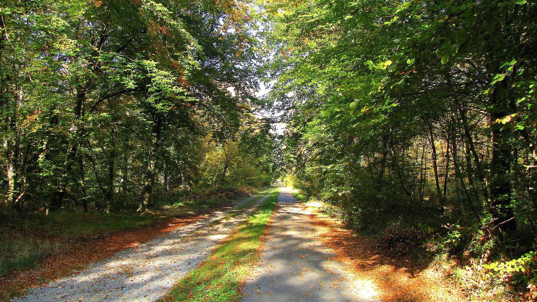 carrefour_Chemin des Meuniers_Route de l'Oiseau