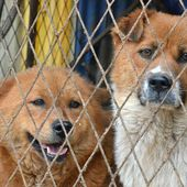 The Violent Yulin Festival: Something Meaningful You Can Do