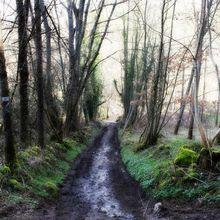 balade dans les bois départ de Moingt jusqu'au châetau d'Ecotay l'Olme (Loire, 42600)