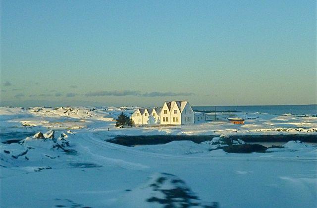 Islande: bouleau, mousse d'Islande et angélique…