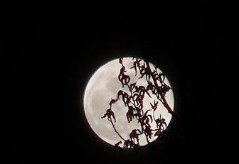 Echographie de la lune ou....