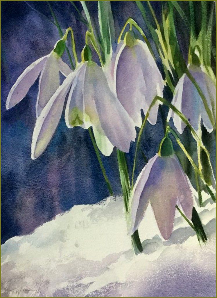 Perce neige Trevor Waugh
