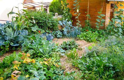 Permaculture : le paillage pour régénérer le sol de nos jardins