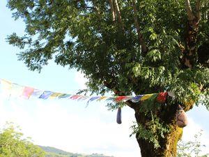 L'auberge  des Milans : Puech Verny  Auvergne vallée d'Aurillac sur Charlotteblablablog