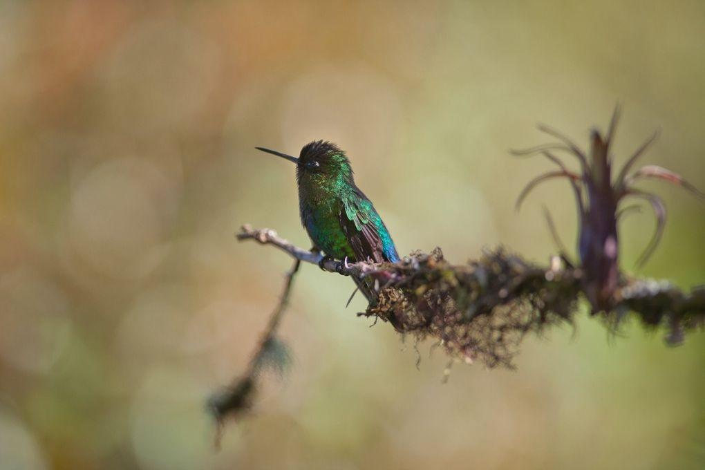 Album - Les-oiseaux-au-Costa-Rica