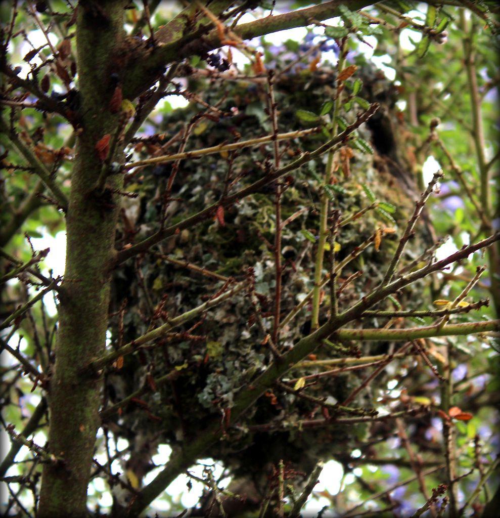Il y a nid et nid....